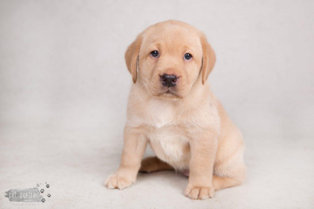 Nestfotoshoot pups Juno en Shai - 18 mei 2017-14