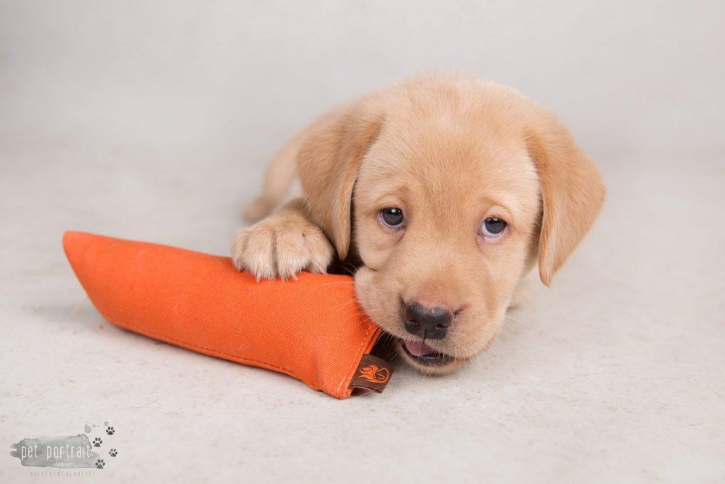 Nestfotoshoot pups Juno en Shai - 18 mei 2017-18