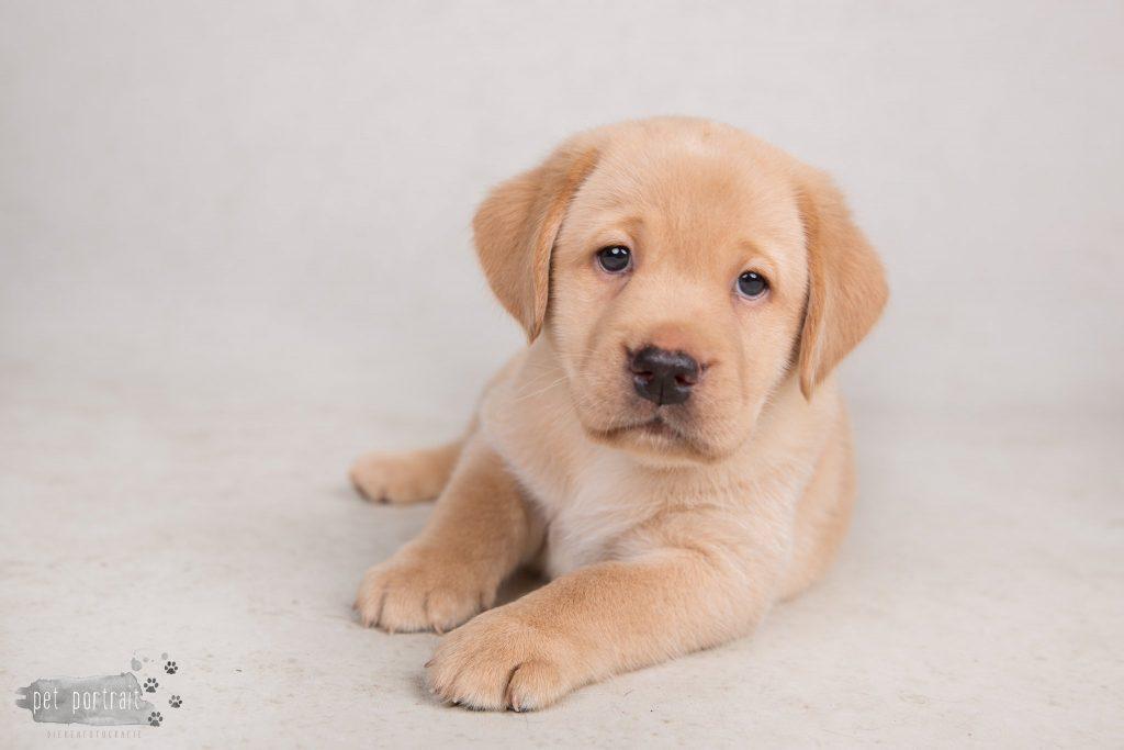 Nestfotoshoot pups Juno en Shai - 18 mei 2017-19