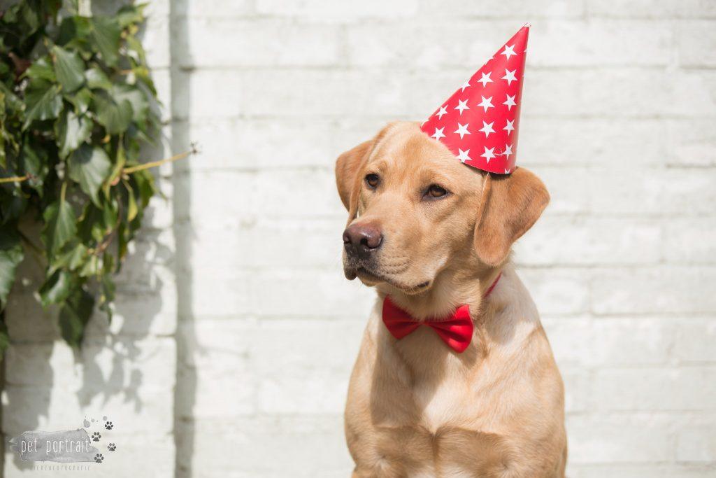Hondenfotograaf Goeree-Overflakkee - Labradors Juno, Freyja en Skadi - week 14-1